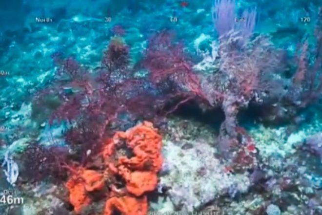 Descubren un arrecife de coral de la altura del Empire State
