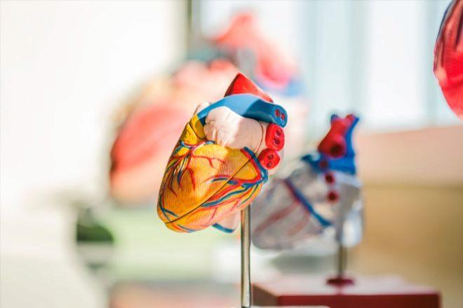 Nueve entidades participan en el proyecto Cardiopatch, que lidera la Universidad de Navarra.