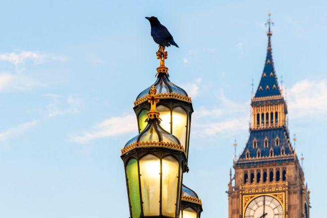 Covid, crisis, Brexit... y ahora falta un cuervo