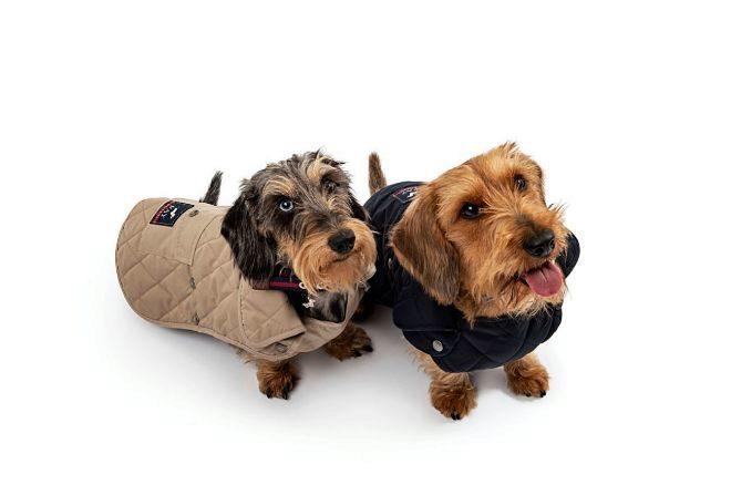 Teckels con chalecos con capa gauteada, 270 euros.