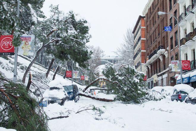 Árboles caídos durante la gran nevada provocada por la borrasca 'Filomena', en Madrid.
