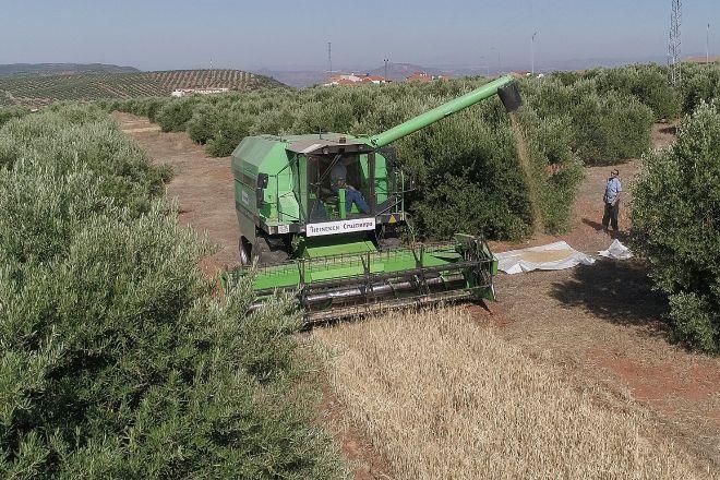 La UE quiere excluir de las ayudas agrícolas a quienes exploten a los temporeros