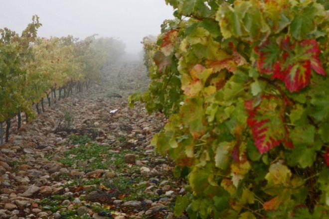 La DO está formada por 370 elaboradores de cava y vino base.