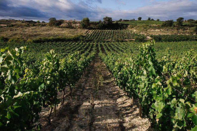 Viñedos en Laguardia (Rioja Alavesa).