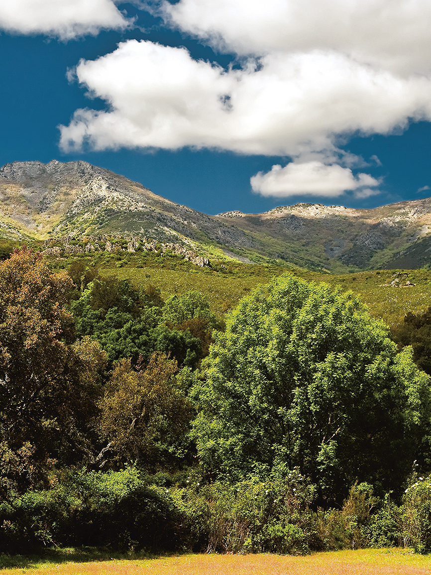 La sierra de las Villuercas es una isla climática en mitad del...