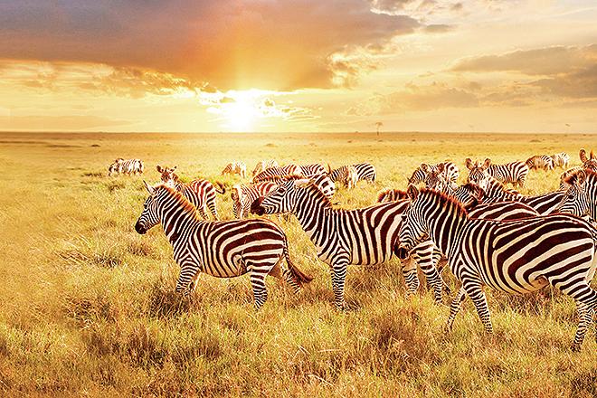 El programa oferta múltiples excursiones en tierra, como la visita de reservas en África.