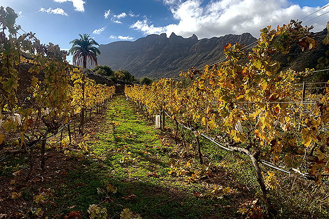 Vista del viñedo. La finca tiene 100 hectáreas, de las que de viñas hay unas ocho con múltiples variedades autóctonas.