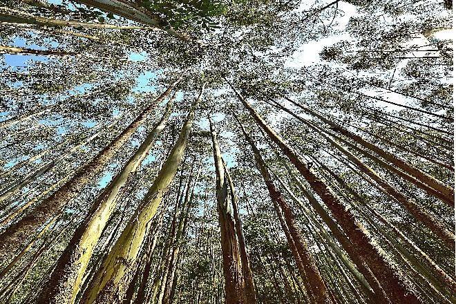 'Pagar' con árboles el CO2  (de momento) inevitable