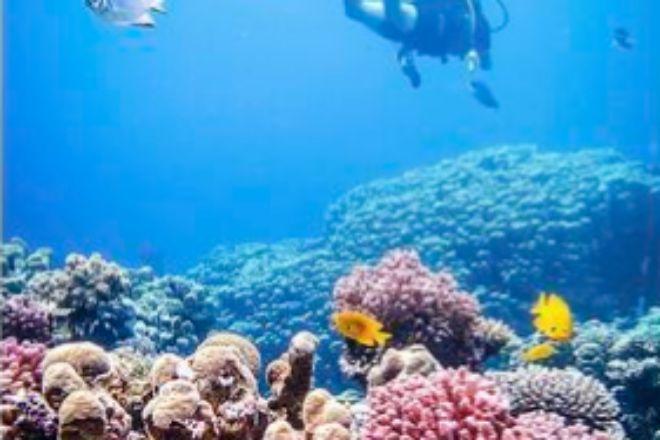 En el último siglo se han perdido el 50% de los arrecifes de coral, una cifra que podría sbir al 90% en 2050.