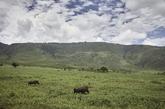 Tanzania engancha. El hilo musical salvaje que emiten el Ngorongoro y...
