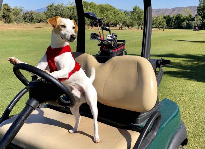 Pipper subido a un buggy en Lauro Golf Resort, en Alhaurín de la Torre, Málaga.