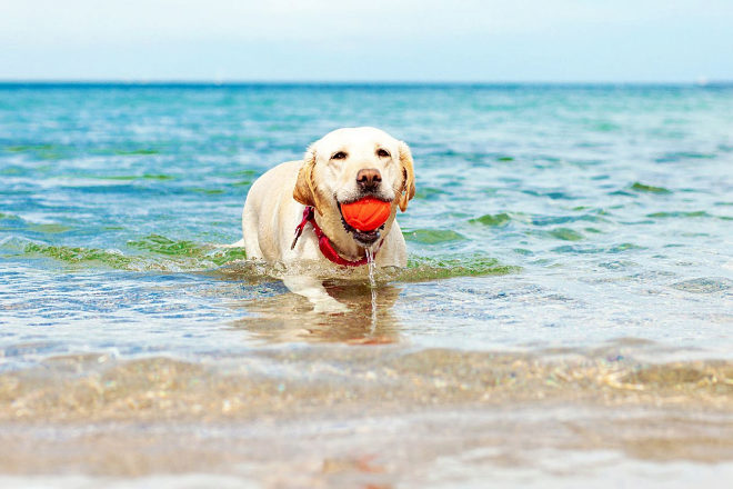 Un perro dándose un baño.