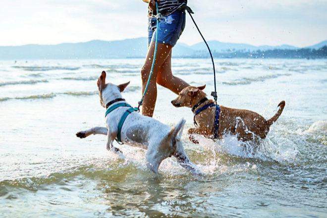 Dos perros disfrutan del mar.