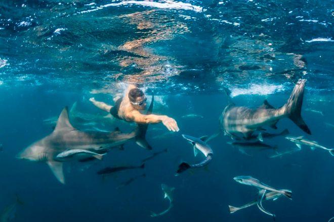 El emprendedor Pablo Fernández nadando entre tiburones en aguas de Sudáfrica.