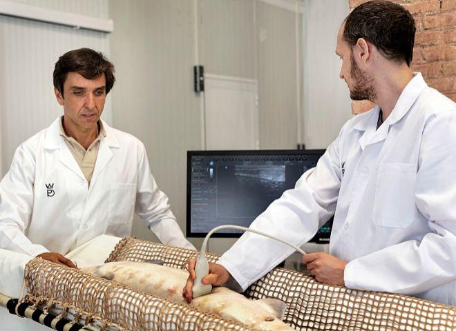 Carlos Cadenas (izqda.), presidente de Caviar Riófrío, asiste a la ecografía de un ejemplar de esturión.