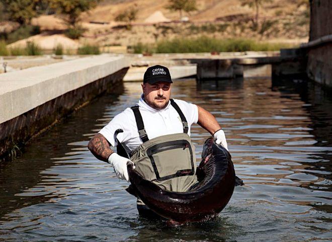 Un empleado de Riofrío con un esturión beluga en la piscifactoría norte de Caviar Riofrío, reformada en 2018.