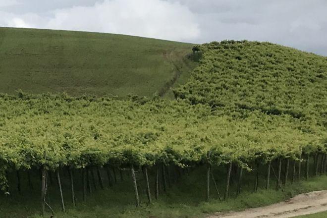 El txakoli, como otros vinos vascos, tendrán ayuda para su promoción en España. En la foto, viñedos de txakoli en Gipuzkoa.