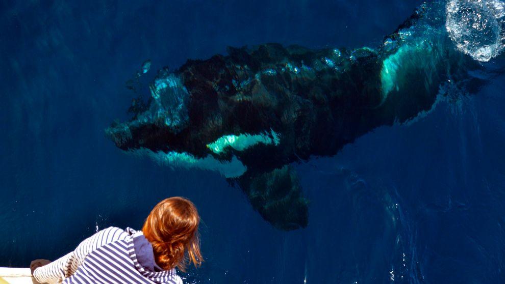 Una orca inspecciona una embarcación en el Estrecho de Gibraltar.  ...