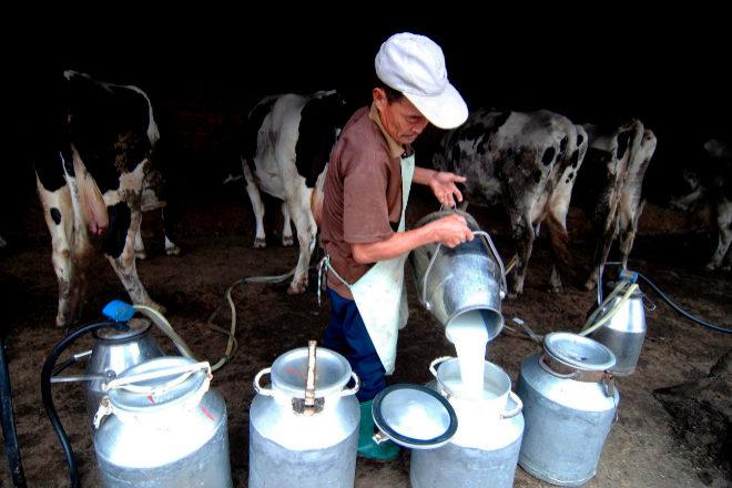 """Nestlé reconoce que los productos lácteos, la carne y el cuidado de los animales domésticos son las """"desventajas"""" de su cartera desde el punto de vista de la emisiones de carbono. En lugar de abandonar estos negocios esenciales para la marca, está invirtiendo más para descarbonizarlos, por ejemplo, fomentando miles de sus explotaciones lácteas con balance cero."""
