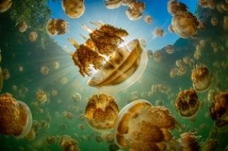 ¿Sabes cómo regulan los mares la temperatura del planeta?