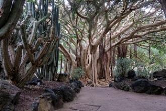 Los cinco jardines botánicos más curiosos de España