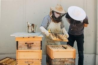 Las abejas se mudan a las ciudades