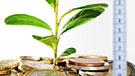 Imagen de brotes verdes sobre monedas con un metro